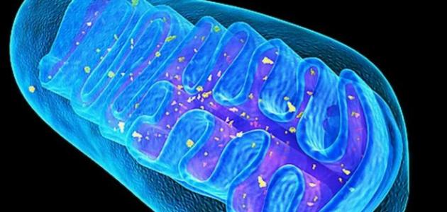 _82528200_mitoc0156765-mitochondrial_structure,_artwork-spl