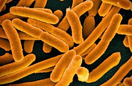 E.coli460