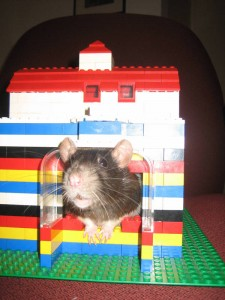 This is a hamster house